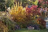 Herbstbeet mit Chrysanthemum (Herbstchrysanthemen), Heuchera