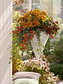 Ampelkorb bepflanzt mit Chrysanthemum (Herbstchrysantheme), Gaultheria