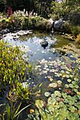 Teich mit Pontederia (Hechtkraut) und Nymphaea (Seerosen), Bachlauf über Steinstufen aus Granit