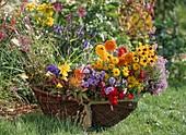 Korb mit Schnittblumen, Rudbeckia / Sonnenhut, Centaurea / Kornblume, Anthirrhinum