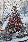 Kleiner Tannenbaum aus Abies nobilis (Silbertanne) gebunden, dekoriert