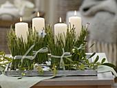 Ungewöhnlicher Adventskranz : Kerzen in mit Pinus (Kiefernnadeln)