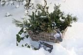 Alle Grünsorten zur Weihnachtsfloristik in Korb, Mütze, Handschuhe, Schere