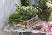 Selbstgebauter Kasten aus Betula (Birke) bepflanzt mit Kräutern