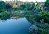 Wassergarten - Picea pungens, Hosta, Santolina pinnata