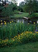 Iris PSEUDACORUS, RANUNCULUS acris