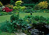 Teichbecken mit Nymphaea (Seerosen) und Sumpfpflanzen, Staudenbeet mit Acer shirasawanum 'Aureum' (Goldahorn), Metall-Vogel und Frosch als Deko, hinten blühende Azaleen
