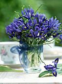 Strauß aus Iris reticulata / Netziris