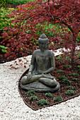 Buddhafigur mit rotlaubigem Acer palmatum 'Dissectum Garnet' (Schlitz-Ahorn), Weg aus weißem Kies
