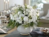 Weißer, duftender Weihnachtsstrauß aus Narcissus 'Ziva' (Tazetten), Pinus