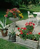 Terrasse mit weißer Sitzgruppe, Kasten mit Pelargonium zonale