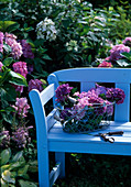 Hydrangea macrophylla / Hortensie