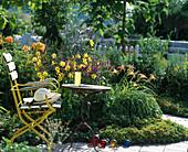 Garten mit Hemerocallis-Hybr. 'Citrina ' (Taglilien), Stachys,