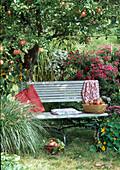 Bank im Garten unter Apfelbaum 'James Grieve'