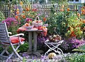 Herbst Beet Sitzplatz Früchte Zaun