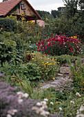 Ländlicher Garten mit Sommerastern, Ringelblumen, Sonnenblumen und Gehölzen, Weg und kleine Trockenmauer