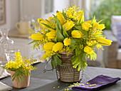Tulipa 'Strong Gold' (Tulpen), Acacia (Mimosen) in rustikalen Töpfen
