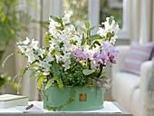 Schale mit Dendrobium nobile, Phalaenopsis 'Table Dance' (Orchideen)