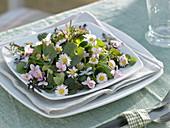 Wildkräutersalat als Frühjahrskur