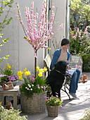 Terrasse mit Mandelbäumchen im Korb