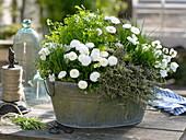 Zinkwanne mit Kräutern und eßbaren Blüten