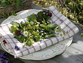 Frisch gepflückter Wildkräuter - Salat