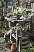Arbeitstisch am Zaun im Bauerngarten mit Sträußen aus Amelanchier