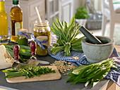 Frisch geernteten Bärlauch (Allium ursinum) zu Bärlauchpesto verarbeiten