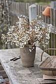 Zweige von Blütensträuchern zum Antreiben schneiden