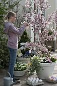 Mädchen schmückt Prunus incisa (Zierkirsche) mit weißen Eiern