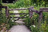 Altes Holzgatter in Blumenwiese : Achillea millefolium (Schafgarbe), Hypericum perforatum (Johanniskraut), Urtica (Brennessel), Leucanthemum (Margeriten)