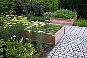 Zwei Hochbeete aus Holz bepflanzt mit Stauden , Geranium (Storchschnabel), Achillea filipendulina 'Credo' (Schafgarbe), Asilbe (Prachtspiere)