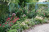 Romantisches Beet mit Centranthus ruber (Spornblume), Allium (ZierLauch), Rosa (Rosen), Digitalis (Fingerhut), Viola cornuta (Hornveilchen), blaue Rankwand