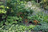 Fruchtstände von Arum italicum (Aronstab), Lobelia siphilitica (Blaue Stauden-Lobelie), Alchemilla (Frauenmantel), Rodgersia (Schaublatt), Hosta (Funkien), Anemone (Herbstanemone)