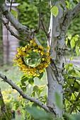 Kränzchen aus Ranunculus acris (Hahnenfuß, Butterblumen) an Betula