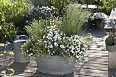 Weiß bepflanzte Blechwanne