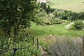 Hanggarten : kleine Treppe zwischen Staudenbeeten mit Nepeta