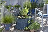 Mini-Teich auf Balkon mit Seerose bepflanzen 4/4