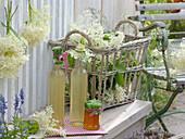 Flaschen mit Sirup von Holunder - Blüten (Sambucus nigra) und Glas