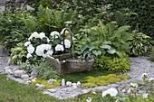 Brunnen mit Steintrog, Hydrangea macrophylla 'Schneeball'(Hortensie), Hosta