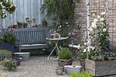 Romantische Terrasse mit Rosa (Rosen), Rosmarin (Rosmarinus), Lavendel