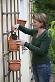 Wand - Hängetöpfe aus Terracotta bepflanzen 2/4