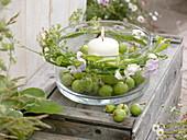 Breite Glasschale mit weißer Kerze und grünen Äpfeln (Malus), Miscanthus