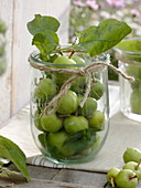 Green apples (malus) in preserving jar, decorated with plucked twine