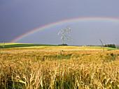 Gerstenfeld mit Regenbogen, Hordeum distichum, Bayern, Deutschland / Barley field with rainbow, Hordeum distichum, Bavaria, Germany