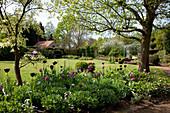 Beet mit Tulipa 'Queen of the Night' 'Purple Flag' (Tulpen) zwischen Bäumen, Blick auf Formschnitt Buxus (Buchs), Pavillon