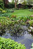 Bewachsener Teich in Garten, dahinter gepflegter Rasen und Gartenhäuschen
