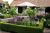 Salvia nemorosa 'Caradonna' (Ziersalbei), Rosa 'Maria Mathilda' (Rosen - Stämmchen) in Beet mit Buxus (Buchs) Hecke, Terrasse mit Sitzgruppe aus Holz und Sonnenschirm
