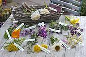 Zutaten für Heil- und Tee-Kräuter-Strauß ausgebreitet mit Etiketten