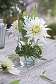Dahlia 'My Love' (Kaktus - Dahlie) in Glas mit Gras-Zopf